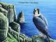 Manx BirdLife founder, Chris Sharpe, honoured in Queen's Birthday Honours List June 2021