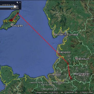 Aalin, the satellite-tagged Manx Hen Harrier, goes on an adventure