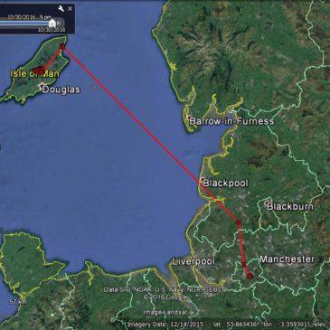 Aalin, the satellite-tagged Manx Hen Harrier, goes on an adventure