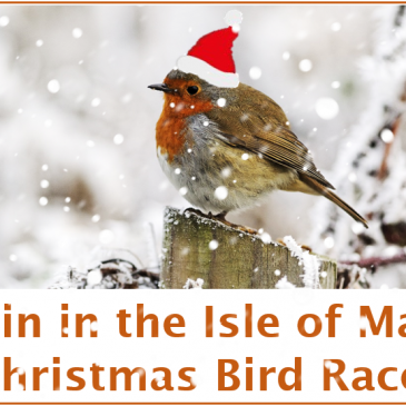 Join in the fun of the Isle of Man Christmas Bird Race!