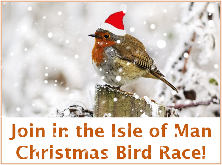 Join in the Christmas Bird Race