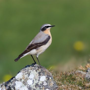 Join us for a fun day learning the 'essentials of bird ID'