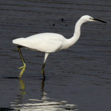 4,000th bird sighting reported for 2017!