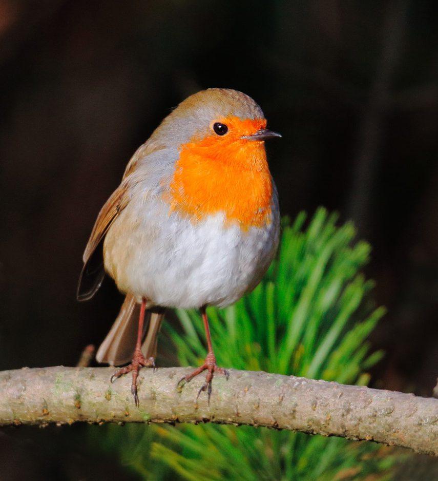 Robin (Neil G Morris)