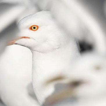 In praise of seagulls