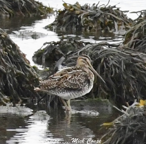 Snipe (Michael Coupe)