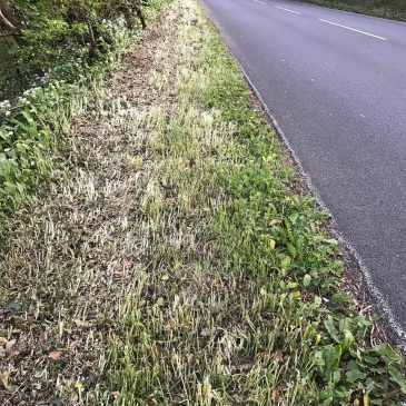 Save our Island's hedgerows and verges