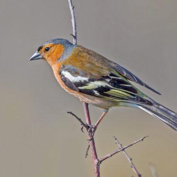 Garden bird disease on the rise again?