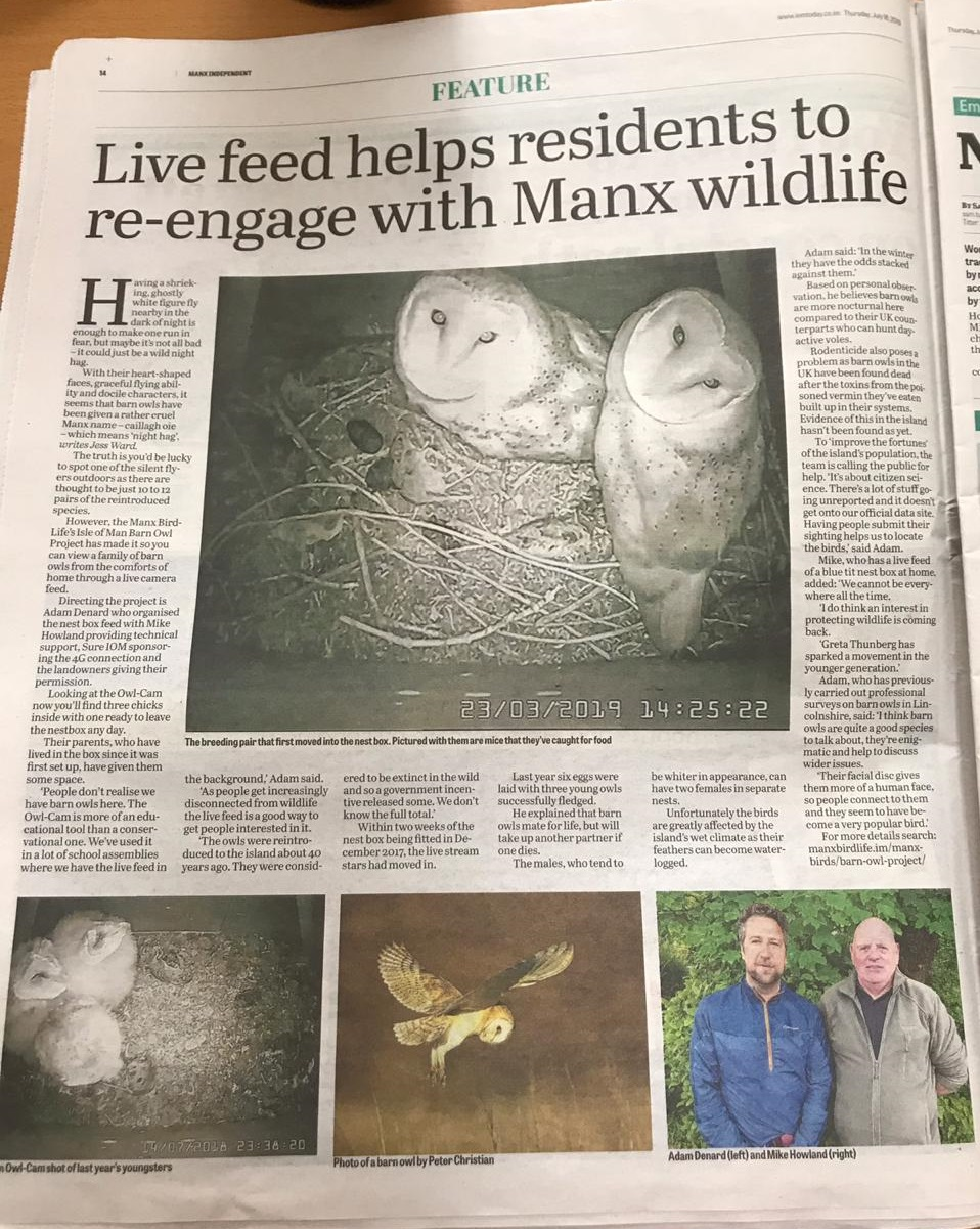 Manx Barn Owls in the news