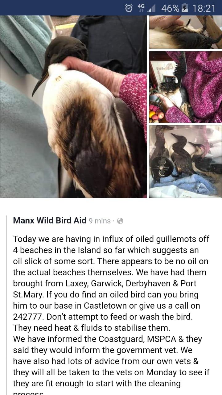(c) Manx Wild Bird Aid