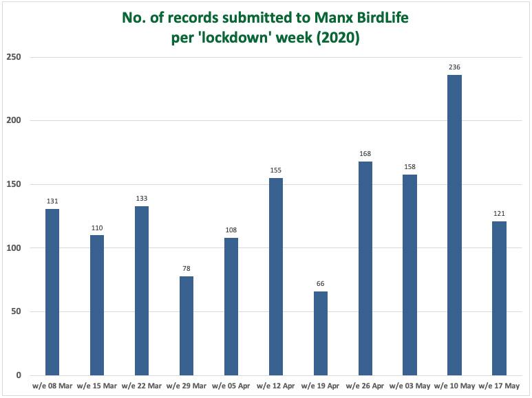 Manx BirdLife bird reports during lockdown 2020