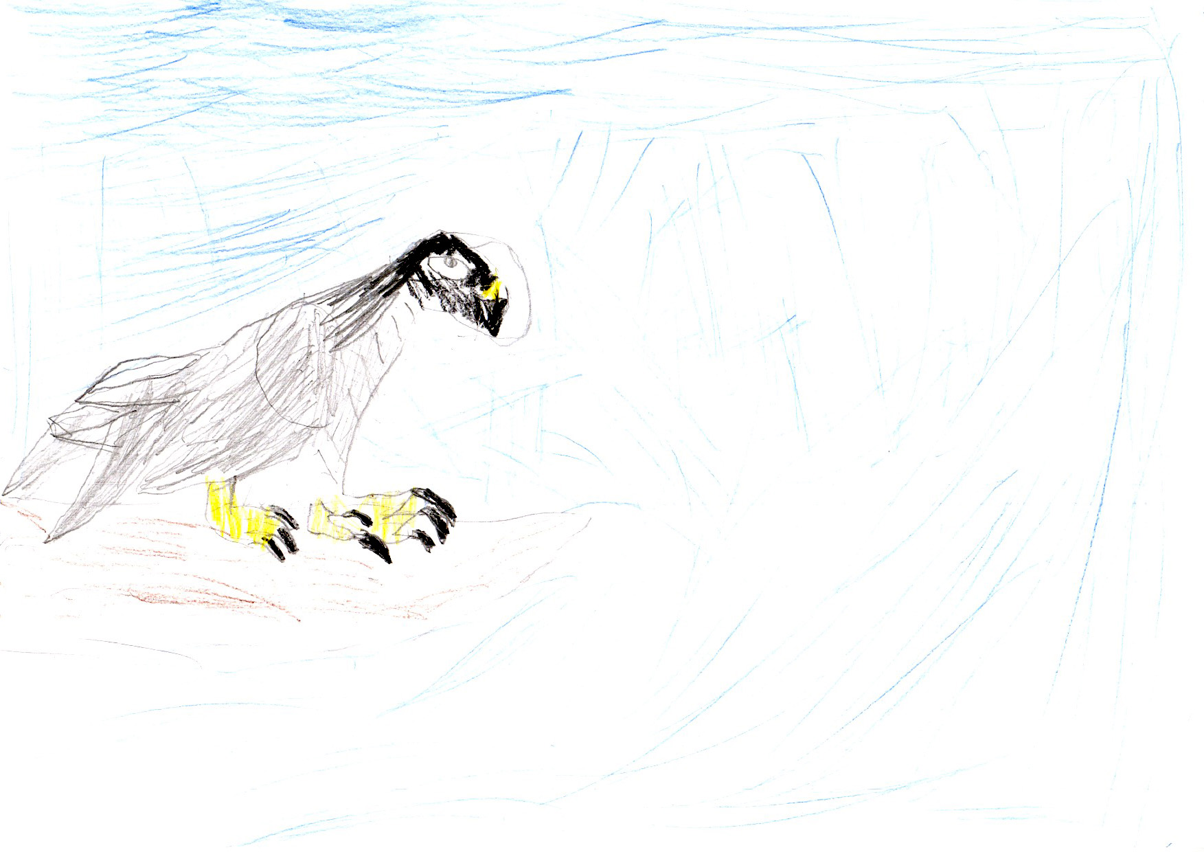 "Above: ""My Favourite Bird"" by Rory (Yr 3, Marown School)"