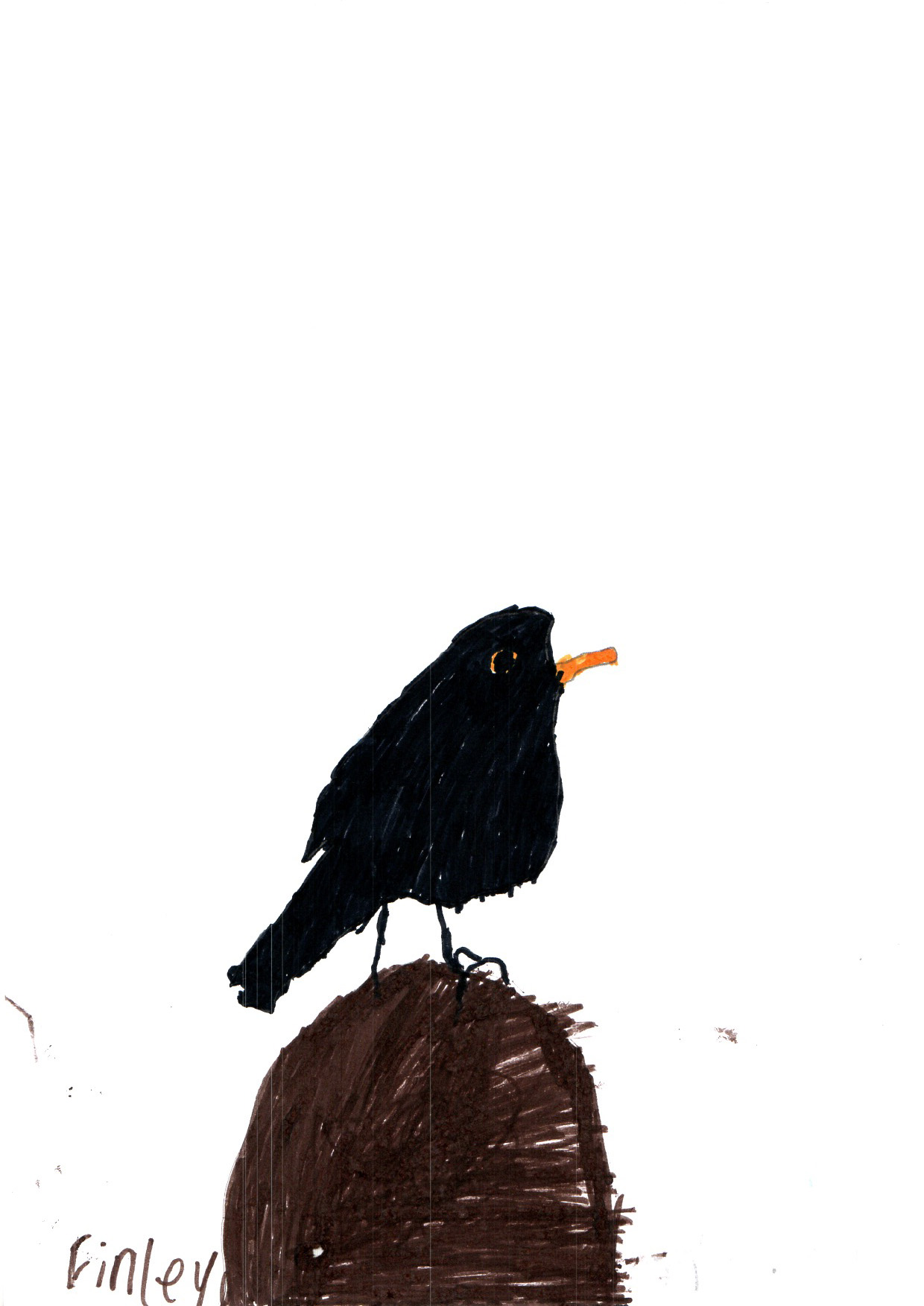 "Above: ""Blackbird"" by Finley Watterson (Yr 3, Arbory School)"