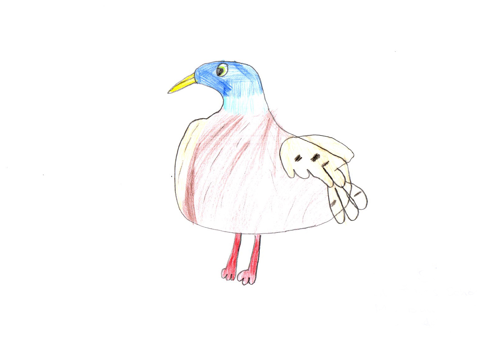 "Above: ""My Favourite Bird"" by Daisy Shimmin (Yr 4, St Johns School)"