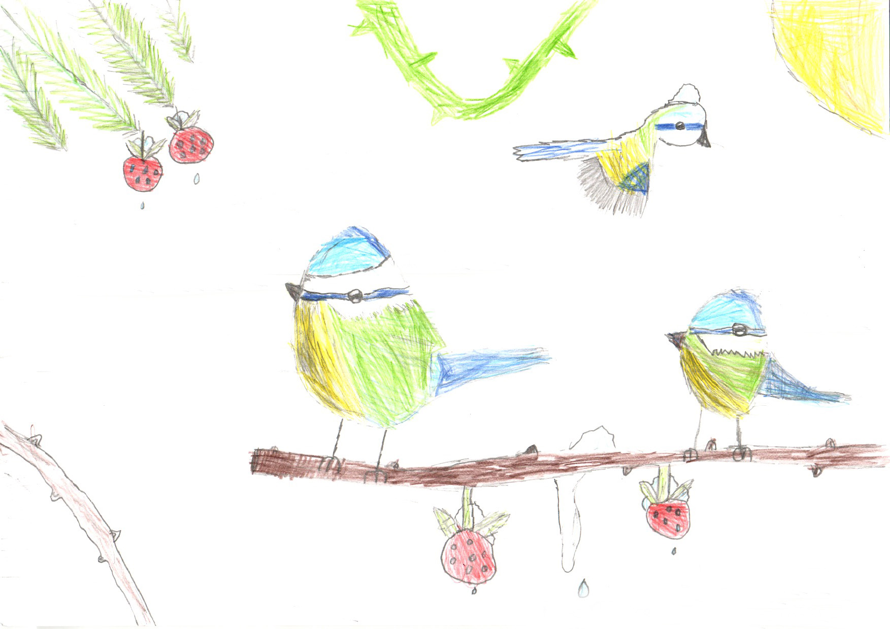 "Above: ""My Favourite Bird"" by Lily Harrison (Yr 4, Foxdale School)"