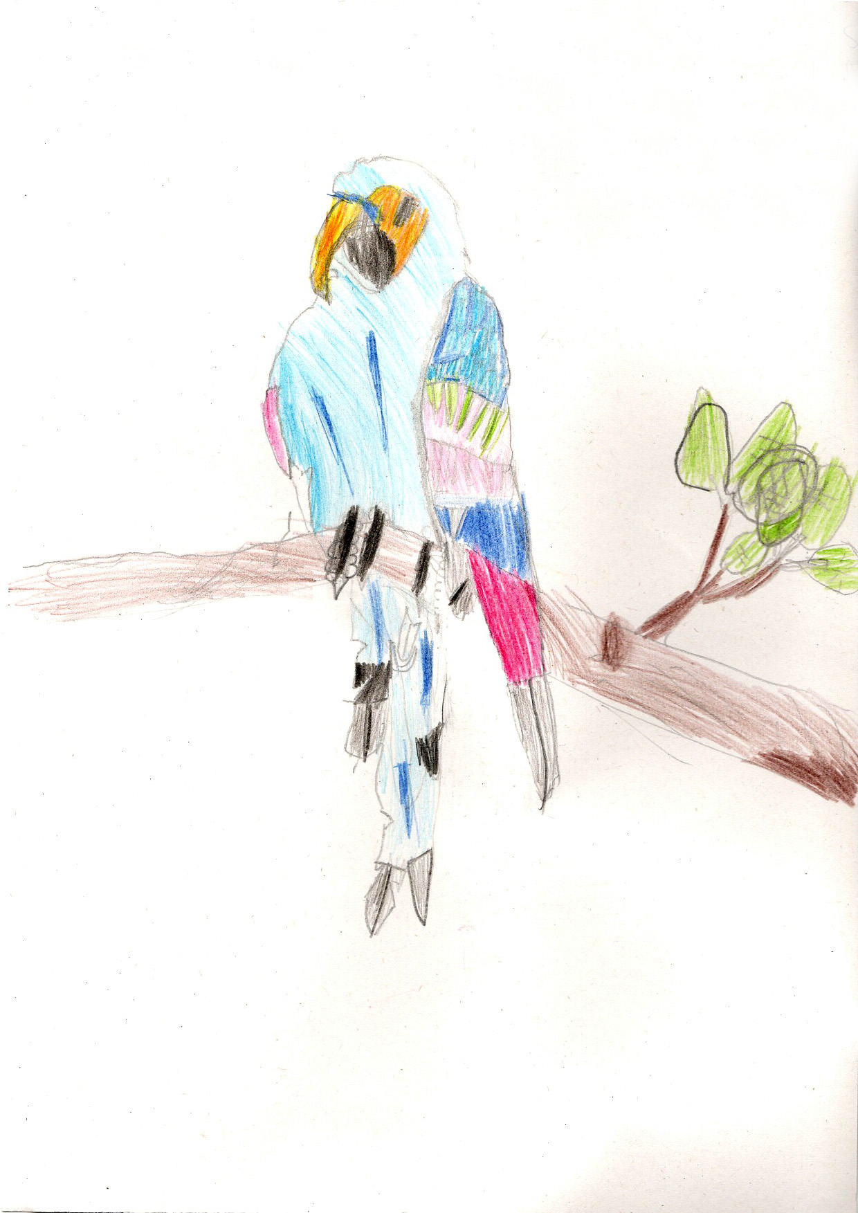 "Above: ""My favourite Bird"" by Elijah Bradley (Yr 4, St Johns School)"