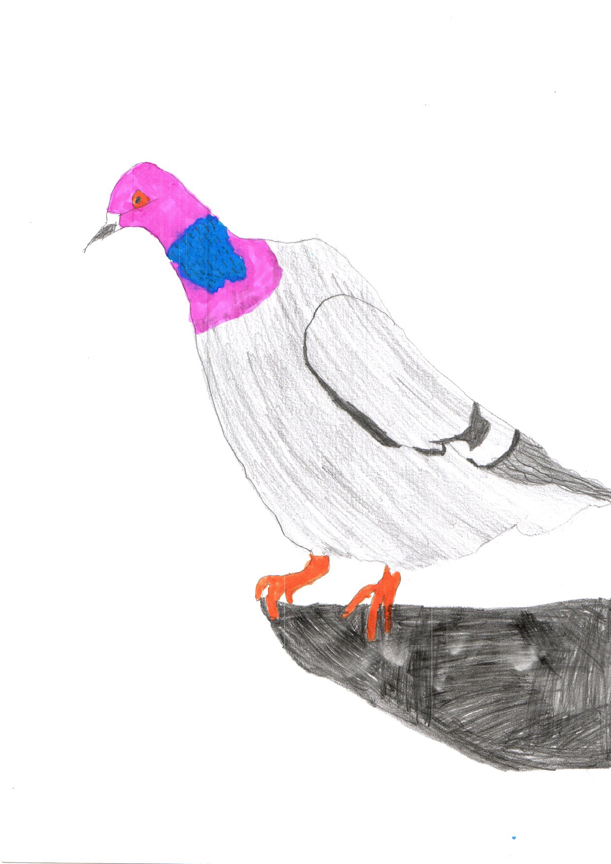 "Above: ""Pigeon"" by Charlie Mackintosh (Yr 4, Arbory School)"