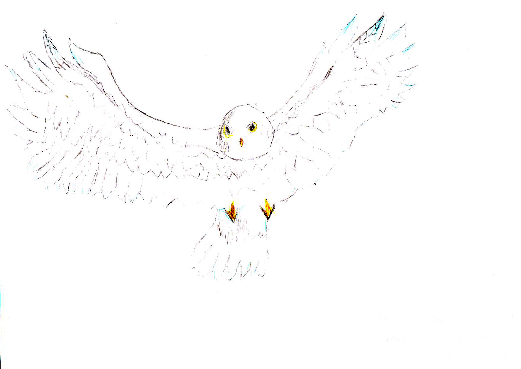 "Above: ""My favourite Bird"" by Cooper Goldie (Yr 5, St Johns School)"