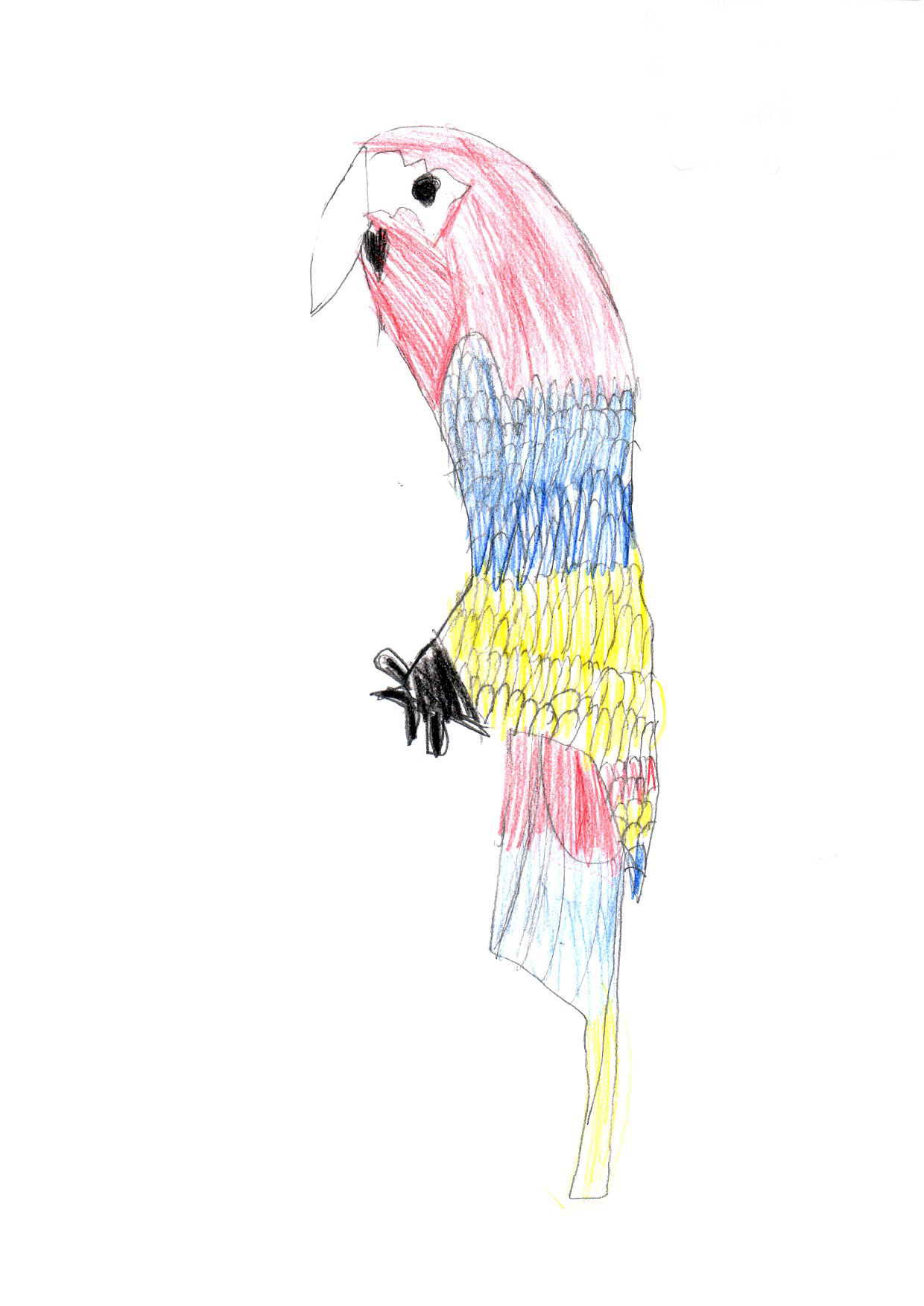"Above: ""My favourite Bird"" by Amira Howard-Murtagh (Yr 5, Foxdale School)"