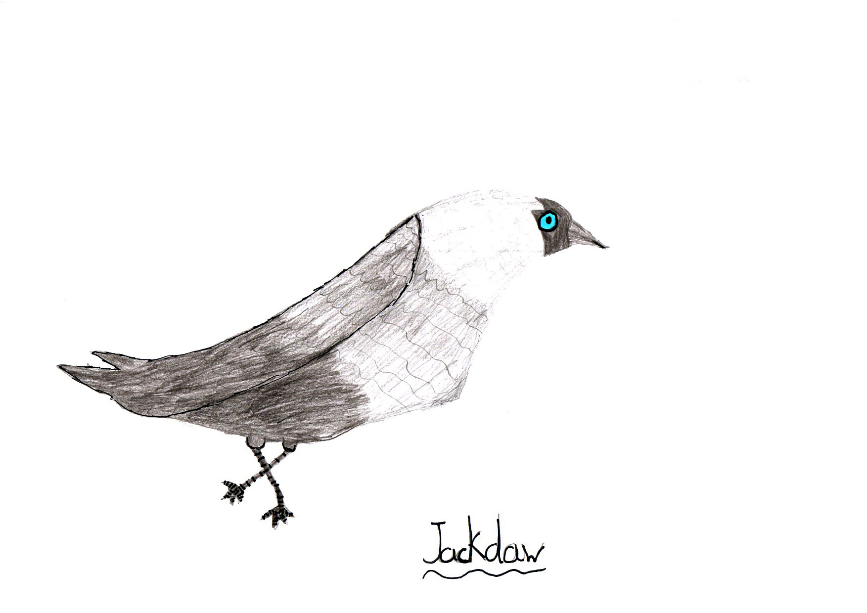 "Above: ""My favourite Bird"" by Iselin Keeling (Yr 5, St Johns School)"