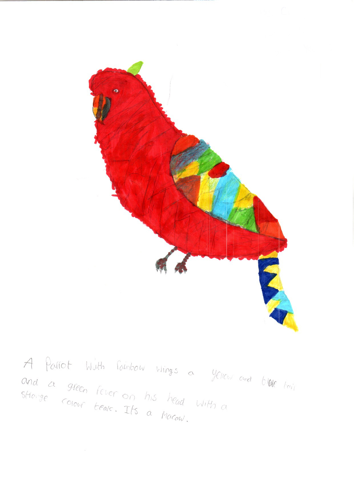 "Above: ""My favourite Bird"" by Daisy Craig (Yr 5, St Johns School)"