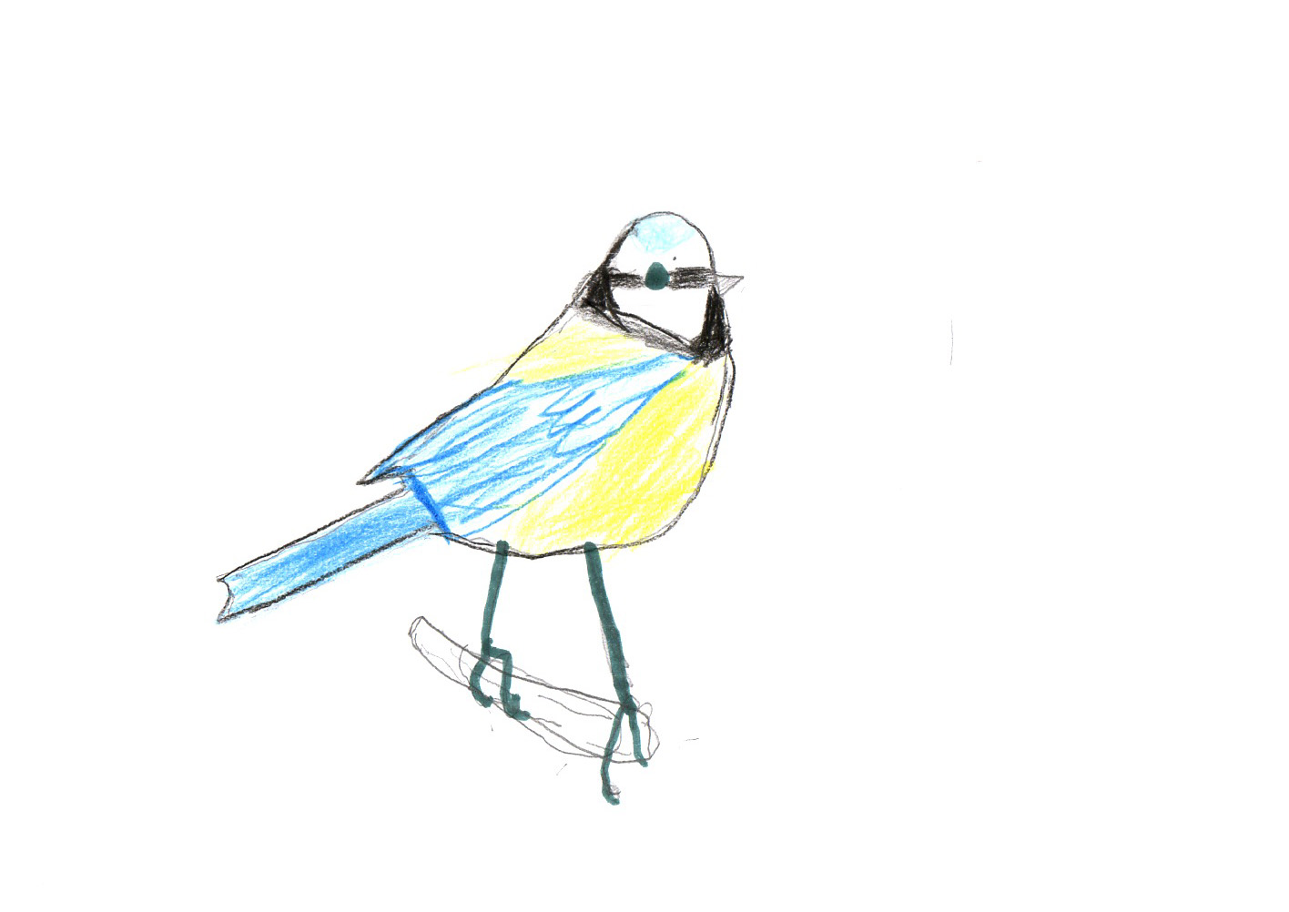 "Above: ""Blue Tit"" by Hugo Brummer (Yr 5, Arbory School)"