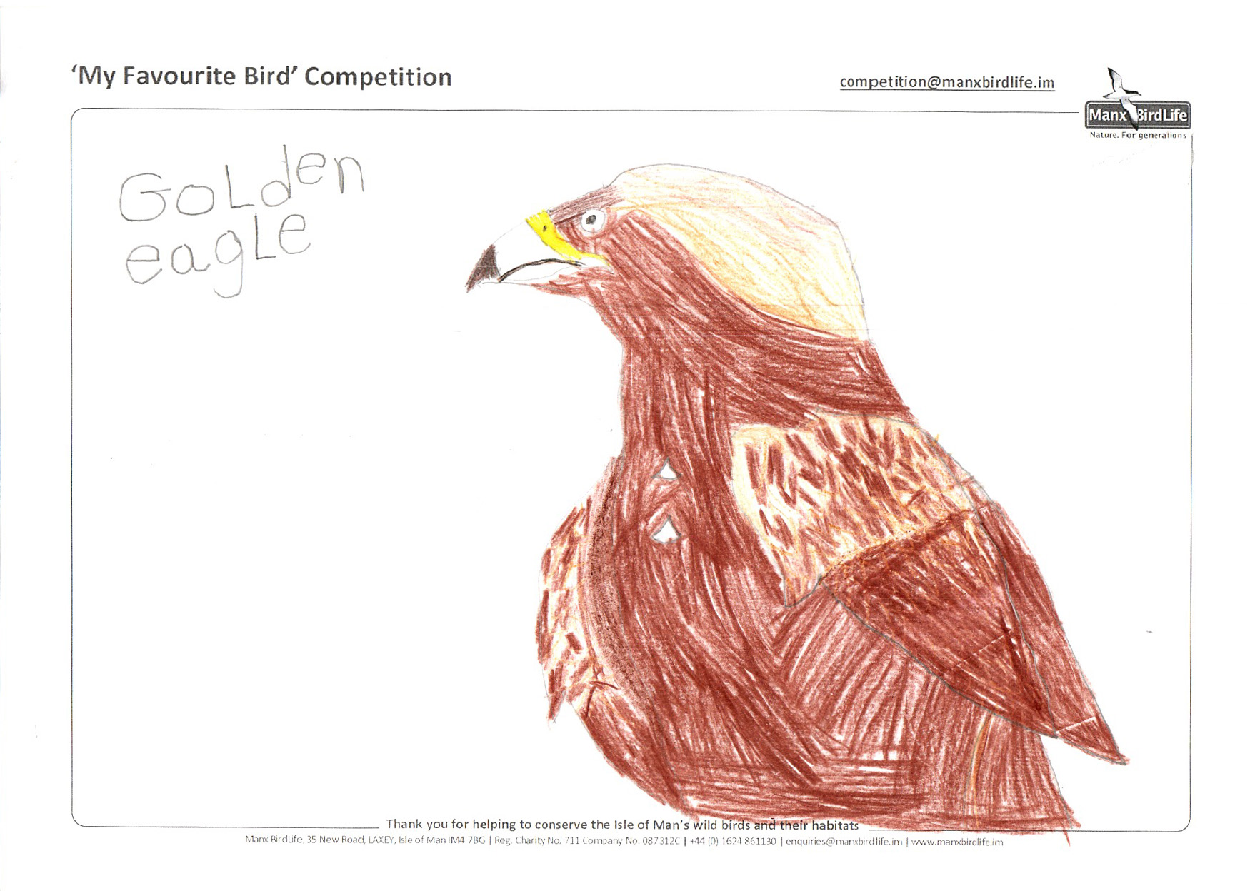 "Above: ""Golden Eagle"" by Hugh Cain (Reception, Ballaugh Primary School)"