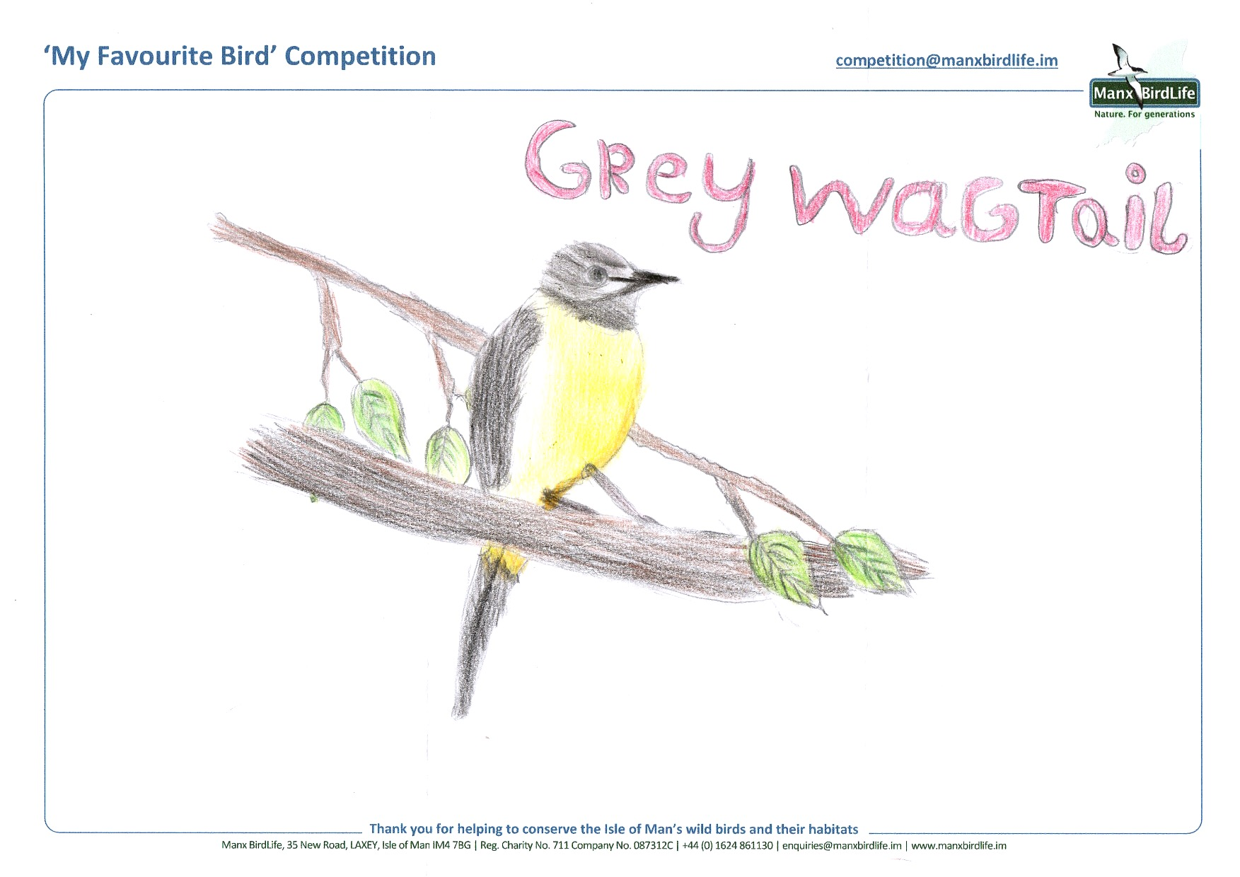 "Above: ""Grey Wagtail"" by Erin Hainge (Yr 4, Michael School)"