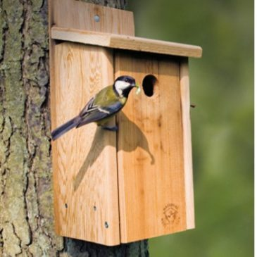 Manx BirdLife supports National Nestbox Week 2021 (from 14th February)